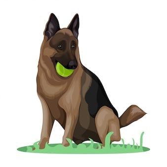 Deutscher schäferhund illustration