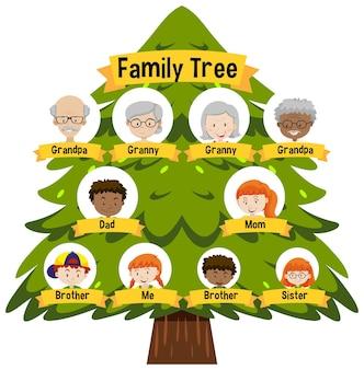 Diagramm, das den stammbaum der drei generationen zeigt