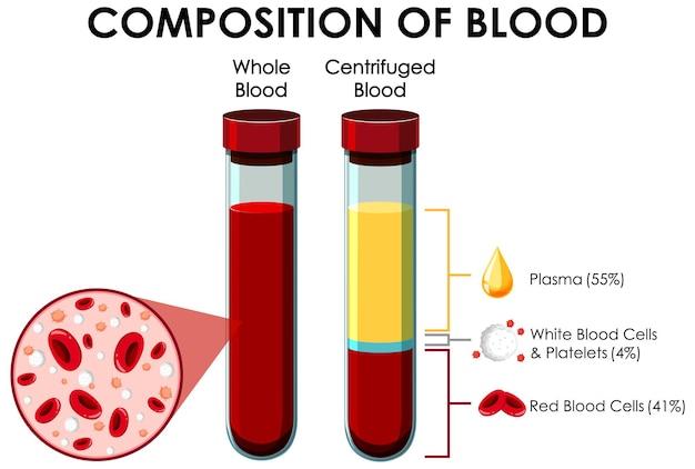 Diagramm, das die zusammensetzung des blutes zeigt