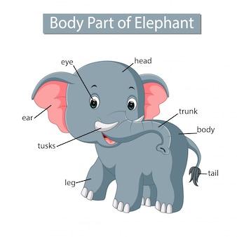 Diagramm, das körperteil des elefanten zeigt