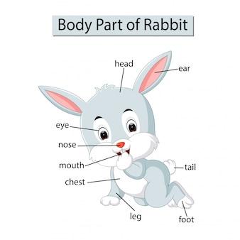 Diagramm, das körperteil des kaninchens zeigt