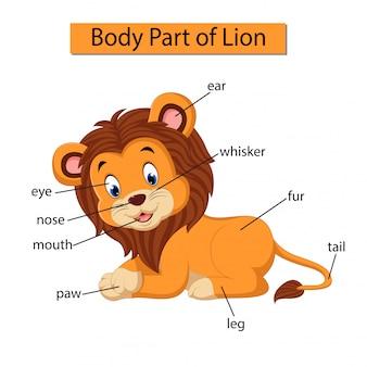 Diagramm, das körperteil des löwes zeigt