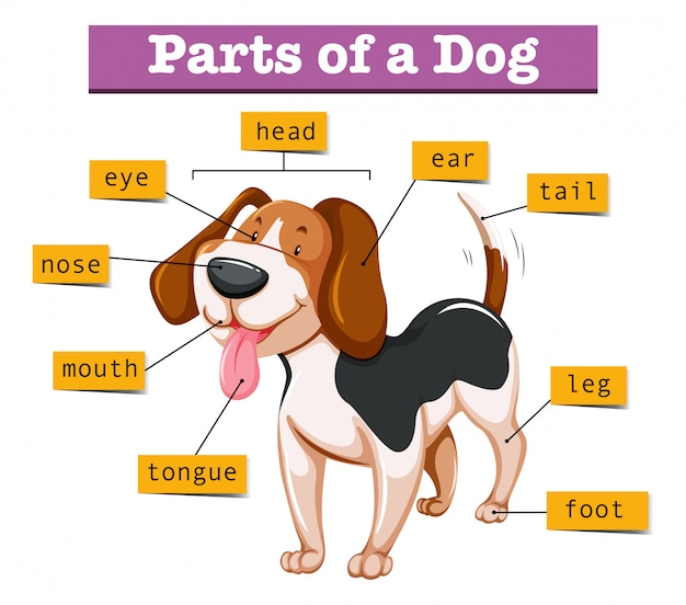 Diagramm, das teile des hundes zeigt