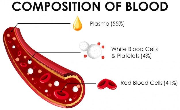 Diagramm, das zusammensetzung des bluts zeigt