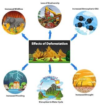 Diagramm mit auswirkungen der entwaldung