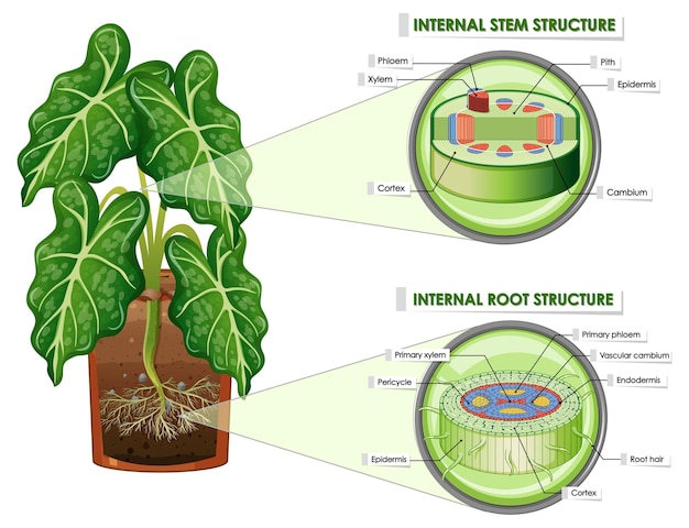 Diagramm mit stamm- und wurzelstruktur