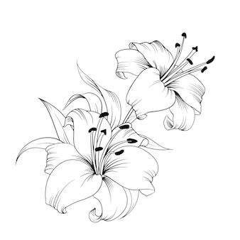 Die blühende lilie.