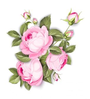 Die blühende rose.