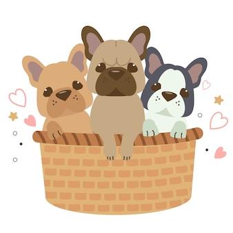 Die nette französische bulldogge des charakters, die im großen korb sitzt.
