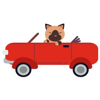 Die nette katze des charakters, die einen roten sportwagen fährt. die katze, die ein rotes auto auf dem weißen hintergrund fährt.