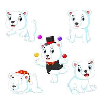 Die sammlung des weißen zirkusbären spielt