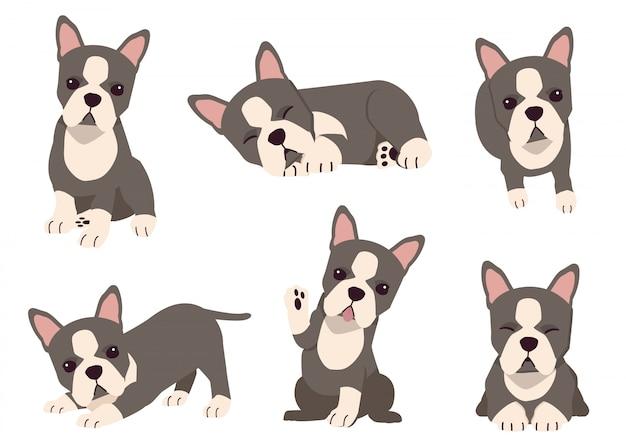 Die sammlung von boston terrier hund in vielen aktionen mit flachen vektor-stil. grafische ressource über satz von hunden boston terrier
