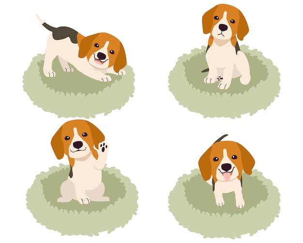 Die sammlung von niedlichen beagle auf dem matratzenkorb oder bett des hundes im flachen stil.