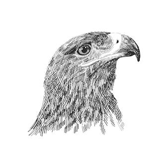 Die schwarzweißabbildung des sakerfalken falco cherrug. hand gezeichnete skizze zeichnen. vogel für falknerei, tier der wild lebenden tiere, falkenkopfporträt