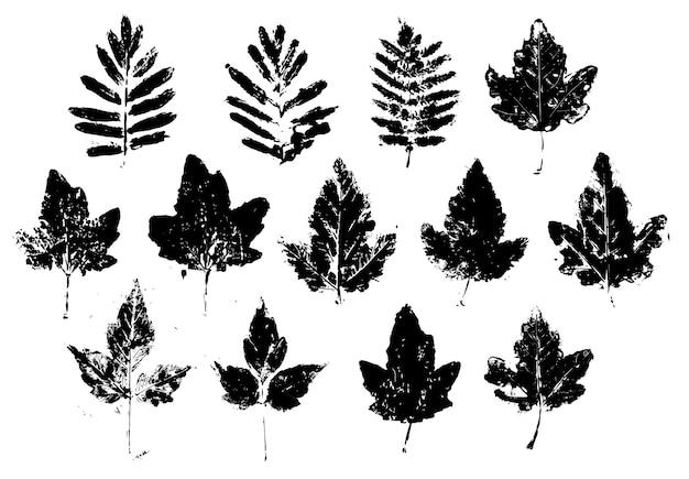 Die silhouette der herbstblätter im grunge-stil ist schwarz. clipart auf weißem hintergrund, isolierte gestaltungselemente.