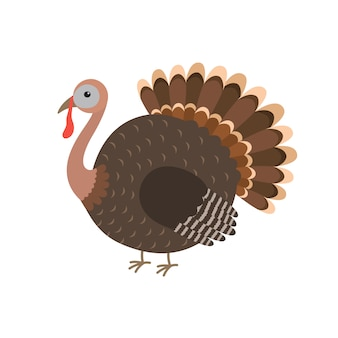 Die türkei-vogelkarikatur