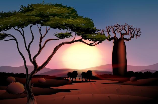 Die wüste mit blick auf den sonnenuntergang
