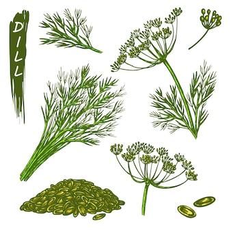 Dillskizzenelemente, gewürze oder kulinarische gewürze. handgezeichnete ikonen der organischen naturpflanze.