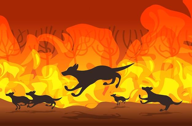 Dingo, der von den waldbränden in australien-tieren sterben im waldbrand bushfire brennende bäume naturkatastrophenkonzept läuft intensive orange flammen horizontale vektorillustration