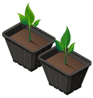 Div sämlinge in plastikbecher. sämlinge pflanzen und wachsen