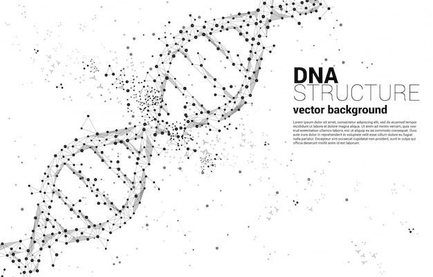 Dna-genetische struktur aus punktverbindungslinienpolygon. hintergrundkonzept für biotechnologie und biologie wissenschaftlich.