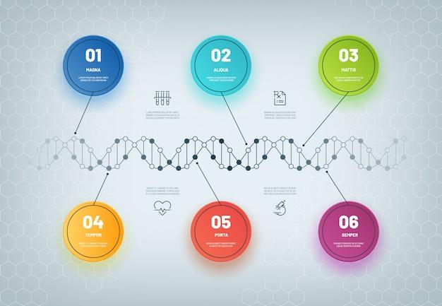 Dna-infografik. molekülkettendiagramm, medizinischer schritt infographic, geschäftsarbeitsfluß. genetische modellzusammenfassung