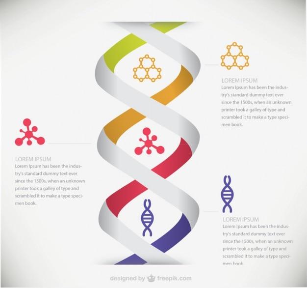 Dna medizinische infografik