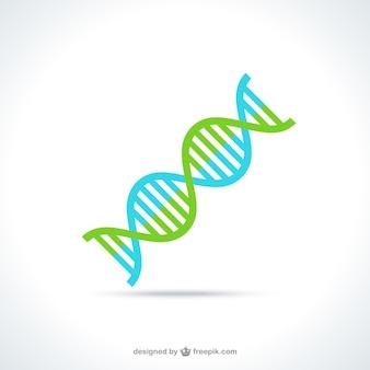 Dna-molekül-struktur