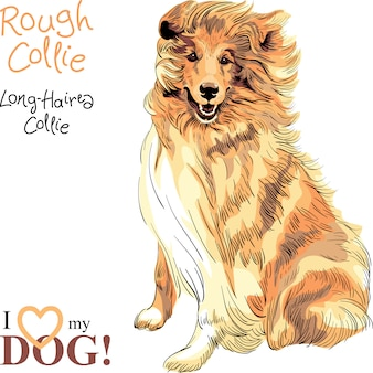 Dog rough collie rasse