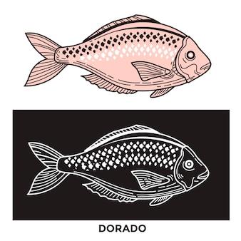 Dorado fisch illustration mit optimiertem strich