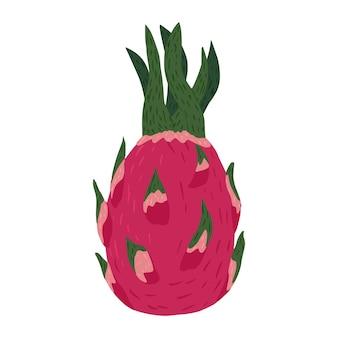 Drachenfrucht isoliert. rosa farbe des tropischen essens im gekritzelstil