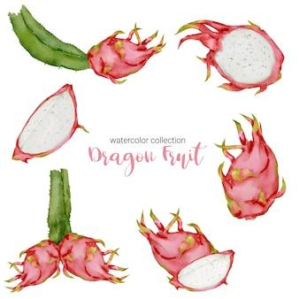 Drachenfrucht, reife frucht in aquarellkollektion mit voller frucht und in stücke geschnitten