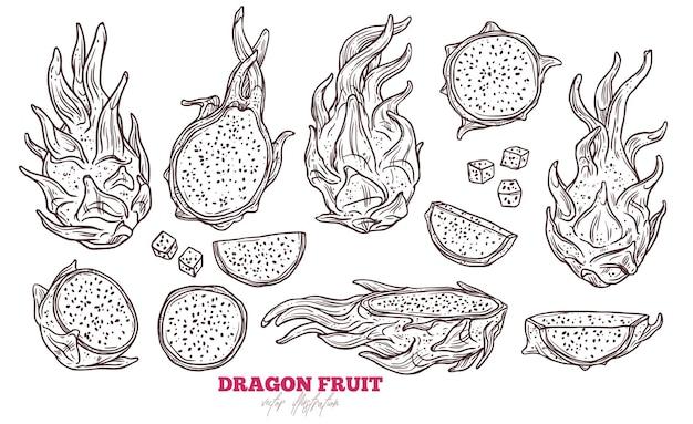 Drachenfrucht-satz, hand gezeichnete skizze tropische exotische pitaya-fruchtillustration