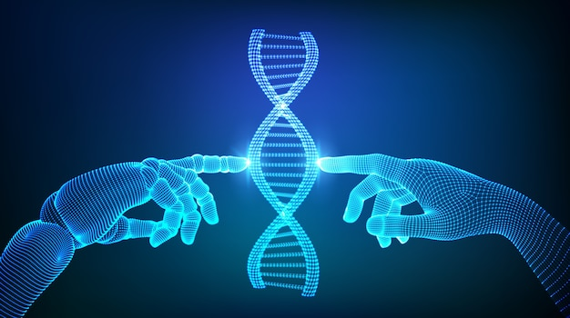 Drahtgitter-dna-sequenzmoleküle strukturieren das netz. hände von roboter und mensch berühren dna.