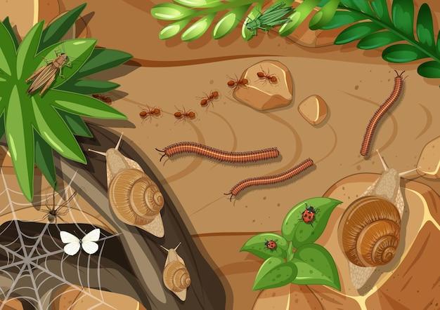 Draufsicht auf verschiedene arten von insekten im garten