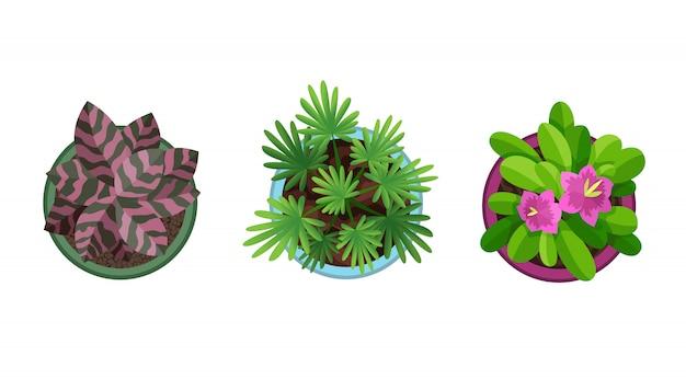 Draufsicht in töpfe pflanzen. heimpflanzenset. kaktus, grünes blattkonzept. gartengestaltung des innenhauses. satz verschiedene zimmerpflanzen mit blumen