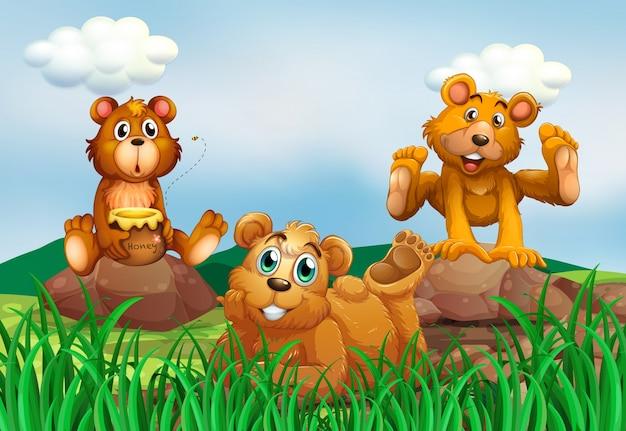 Drei bären auf dem feld