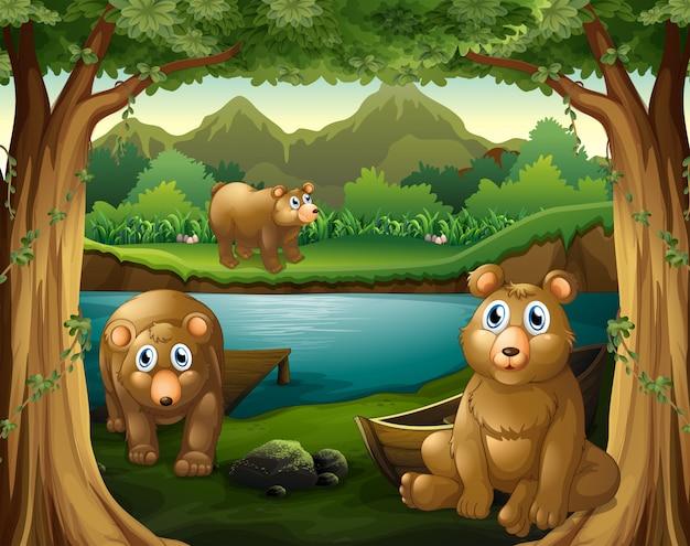 Drei bären leben am fluss