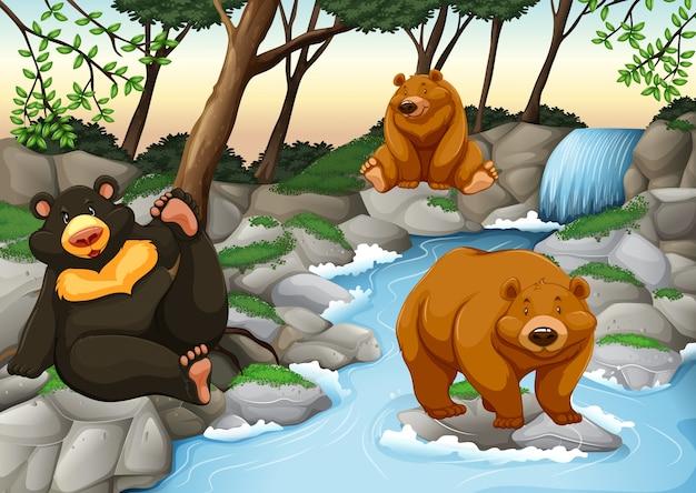 Drei bären leben am wasserfall