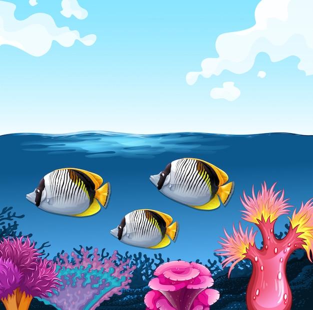 Drei fische schwimmen unter dem ozean