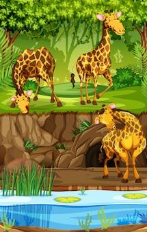Drei giraffen im dschungel
