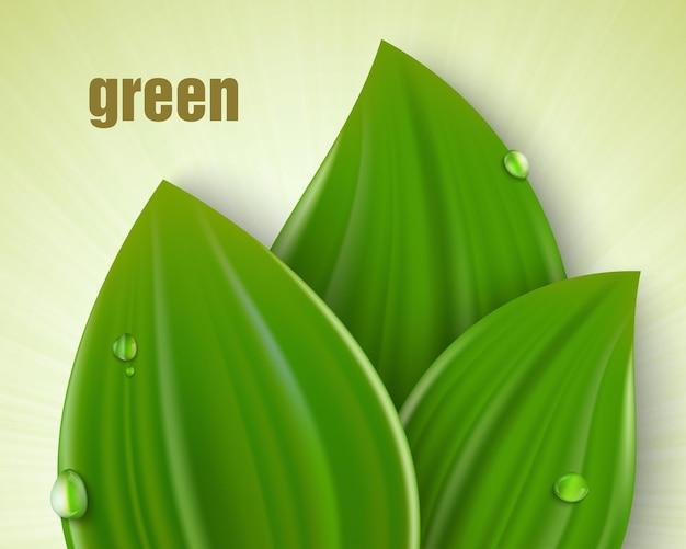 Drei grüne blätter mit tautropfen und sonnenlicht