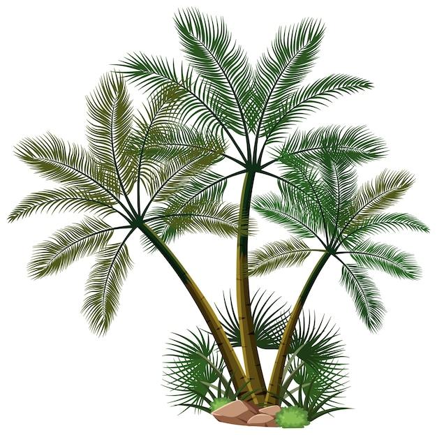 Drei palmen mit naturelementen auf weißem hintergrund