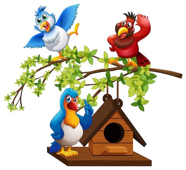 Drei papageien fliegen um vogelhäuschen