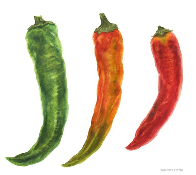Drei scharfe chilischoten, grün, orange, rot