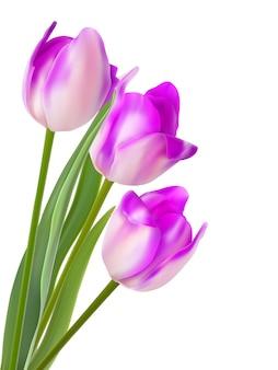 Drei schöne tulpen, lokalisiert auf weiß.