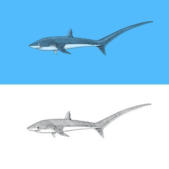 Drescherhai und atlantischer bullenhai oder makrele heringshai raubtier meerestier meereslebewesen hand