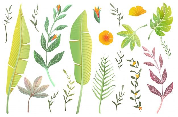 Dschungelnaturblätter, tropische sammlung von isolierten realistischen palmen- und bananenblättern und blüht sommerelemente. blumen und exotische blätter realistische handgezeichnete clipart-sammlung.