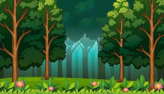 Dunkler regenwald mit großer baum-landschaft