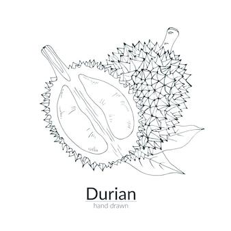Durian ganz und abgeschnitten, monochrome farbe. handgezeichnete illustration. karte, poster, vorlage.